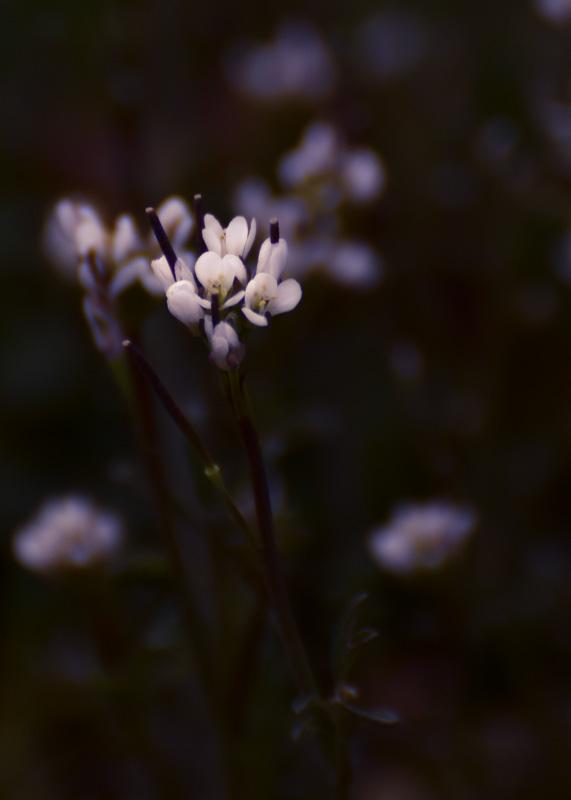 Tag 64 - Blumenstimmung