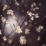 Tag 76 - Blütenzauber