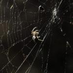 Tag 83 - Itsy Bitsy Spider