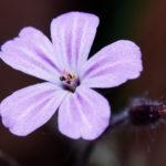 Tag 101 - Blütenschönheit