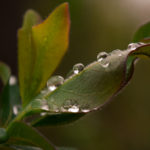 Tag 90 - Raindrops II