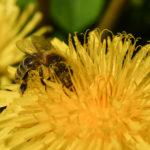 Tag 93 - Fleissiges Bienchen